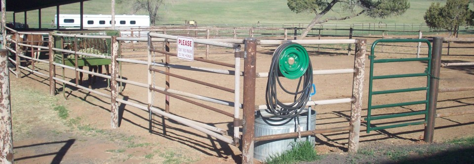 Horse Boarding Amenities