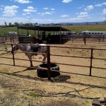 Generous corral space with RV hook up close to your horses.