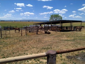 covered stalls next to round pen with covered isle way