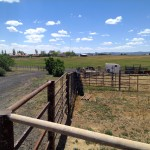 Round pen area and outlying property